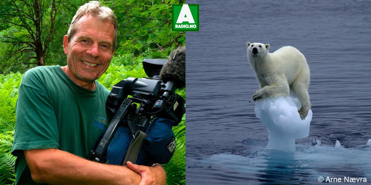 Arne Nævra – fotograf og naturfilmskaper